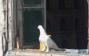 POSTCARD: Он готов поменять автомобиль на голубей...