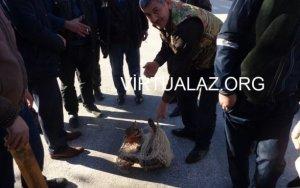 В центре Сальяна поймали рысь - ФОТО