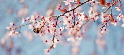 Yurdumuza bahar gəlir
