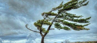 Синоптики прогнозируют ветреную погоду